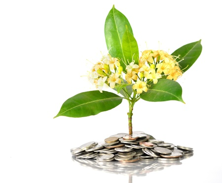 Tree with flowers growing on moneys coins in success concept photo