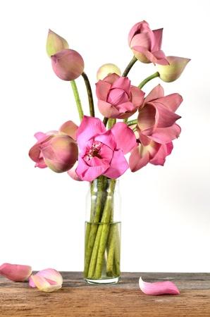 Still life pink lotus flowers photo