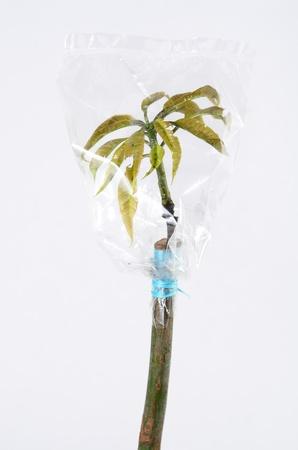 CLose upPlant topworking for Plant propagation