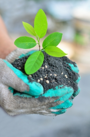 urea: CLose up hand holding tree growing with soil