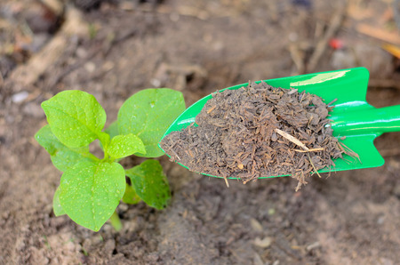 Farmer apply organic compost fertilizer to young plant