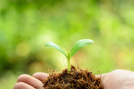 Young plant on male hand with organic soil pile over green and beginning to grow for people food and forest