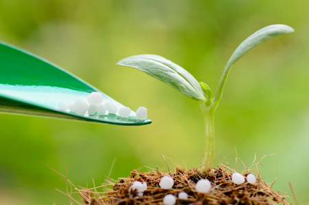 Fertilizer   Giving chemical  Urea  fertilizer to young plant over green