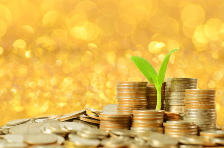 money coins pile and young tree on gold in banking concept photo