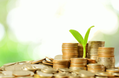 coins pile: money coins pile and young tree on green in banking concept