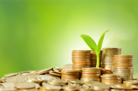 money pounds: money coins pile and young tree on green in banking concept