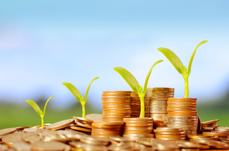 trees services: Trees growing on pile of coins money over green and blue sky background