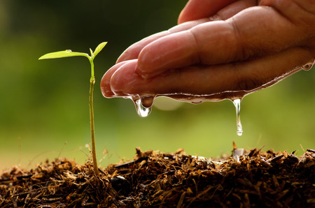 saplings: Agriculture,Tree,Se eding,Seedling,Male hand watering young tree over green background,seed planting