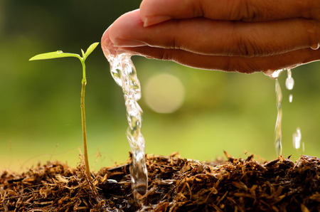 農業、木、Se eding、苗、Male hand 緑の背景、種植わる以上若い木に水をまく