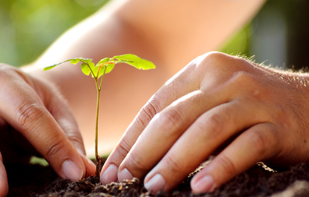 Male hand planting young tree over green background