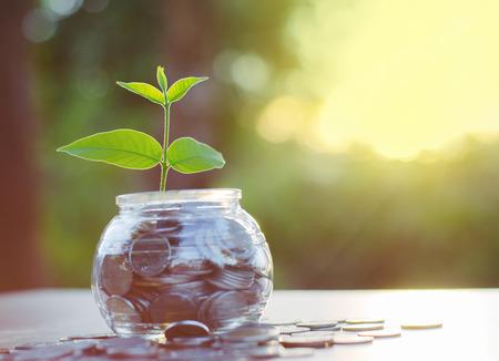 prosperidad: Crecimiento de los �rboles j�venes en monedas del dinero, Concepto de ahorro de dinero