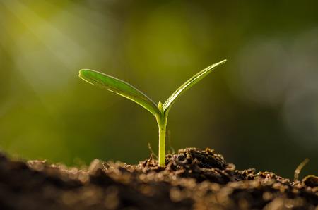 Plant, Landbouw, Zaaien, Seedling, close-up jonge plant groeit over groene achtergrond Stockfoto
