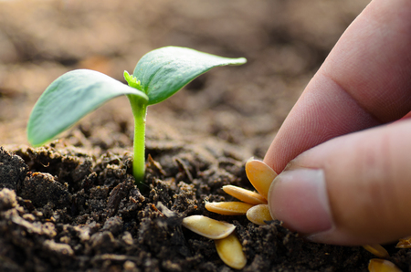 Seeding,Seedling,Soil,Agriculture,Close up Young plant growing with hand planting Stock Photo