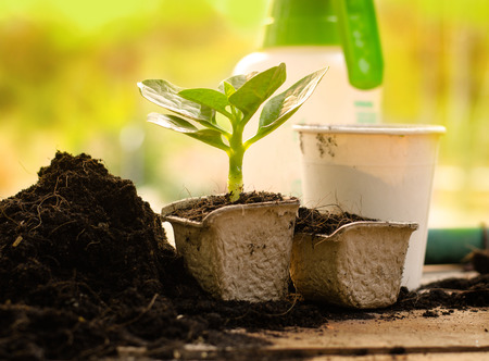 Agriculture,Plant,Seed,Seedling,Plant Growing on paper recycle pot over sunlight in morning time