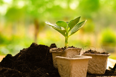 recycle: Agriculture,Plant,Seed,Seedling,Plant Growing on paper recycle pot over sunlight in morning time
