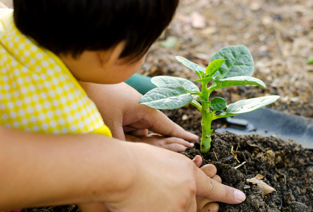 seeding: Soil,Planting,Seeding,Seedling,Close up Kid hand and father planting young tree Stock Photo