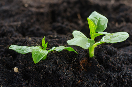 plant seed: Plant,Seed,Seedling,Agriculture,Plant Growing Plant Growing concept over sunlight in morning time