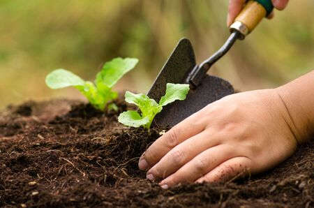 Agriculture,Plant,Seed,SeedlingFarmer planting sapling into soil over sunlight in morning time