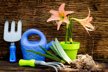 Spring gardening with garden tools kid toy and plant growing over old wood background