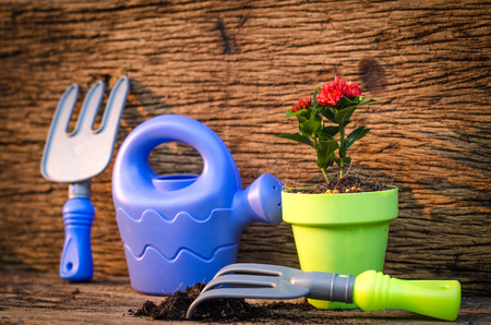 Spring gardening with garden tools kid toy and plant growing over old wood background vintage style.