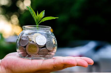 saving money for buy car concept,bank,piggy bank,Money,Coins,Tree, Sprout growing on glass piggy bank with sunset light