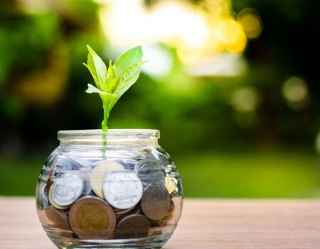 bank,piggy bank,Money,Coins,Concept,Tree, Sprout growing on glass piggy bank with sunset light in saving money concept