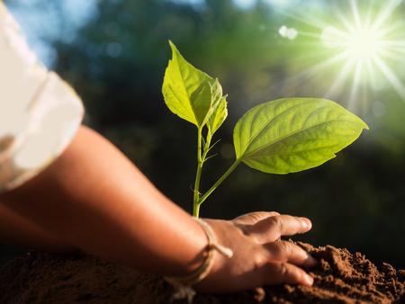 helping: Cierre para arriba al niño mano plantación joven árbol sobre la luz solar y el entorno verde de la naturaleza