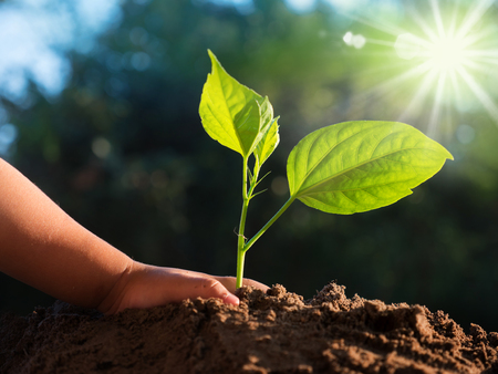 Close up kid hand planting young tree over sunlight and green nature environment