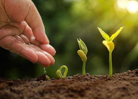 太陽の光と緑、自然の背景を持つ若い植物に水を与える男性の手