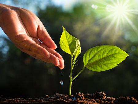 植物、森林概念を保存します。太陽の光と緑、自然の背景を持つ若い植物に水を与える男性の手 写真素材