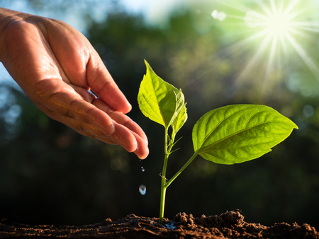 plant and save forest concept. Male hand giving water to young plant with sunlight and green nature background Stockfoto