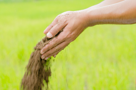Plant organic compost fertilizer poring with farmer hand for planting over green background Stockfoto