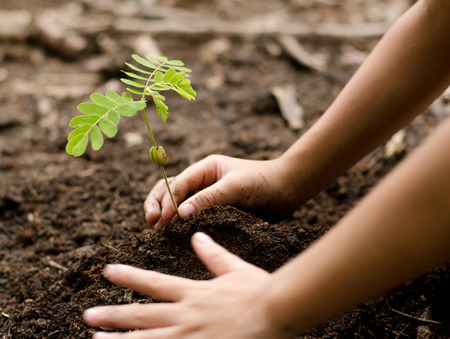 Close up Kid hand planting young tree Stockfoto