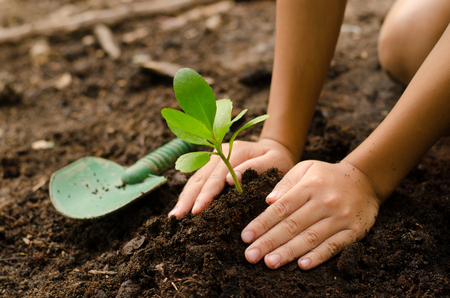 Close up Kid hand planting young tree Imagens