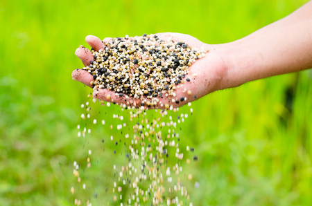 Farmer hand pouring plant chemical fertilizer over green background Stockfoto