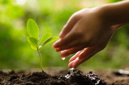 Close up kid watering young tree over green background Stockfoto