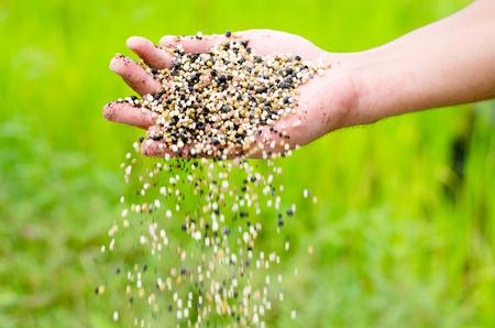 Agriculteur agricole fertilisant chimique sur fond vert Banque d'images - 76977070