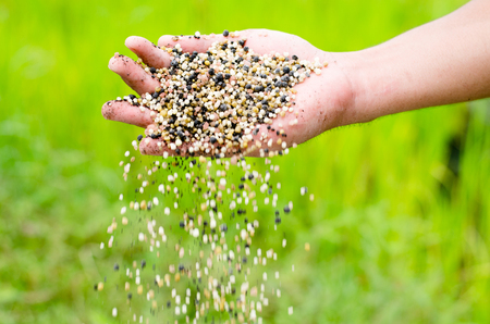 Farmer hand pouring plant chemical fertilizer over green background Stock Photo
