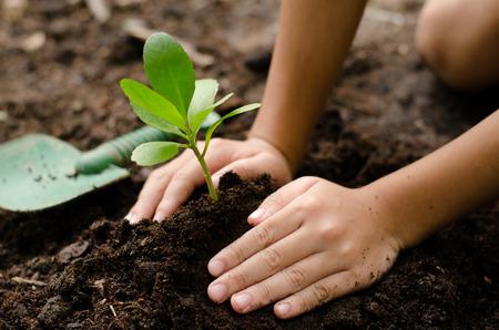 Close up Kid hand planting young tree 版權商用圖片