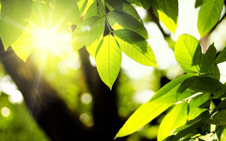 Plant and natural green environment background with sunlight for design