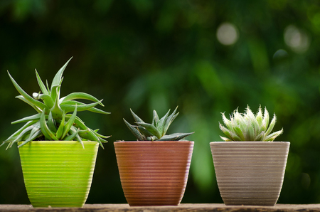 close up plant pot with cactus with green background