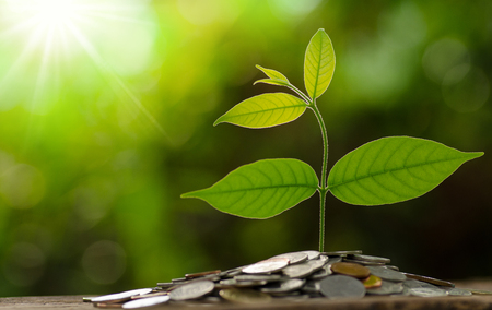 Money and growing of business concept, Tree grow on pile of money coins over green background and sunlight