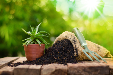 cactus on plant pot with fertilizer bag over green background, Summer garden concept Stockfoto