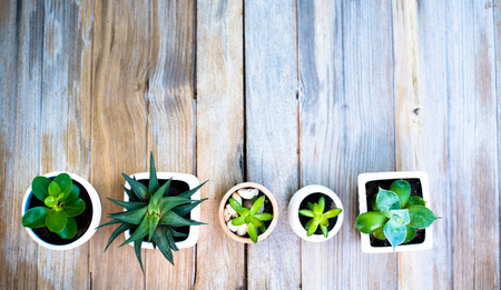 Plant pot on old wood background top down view for template background