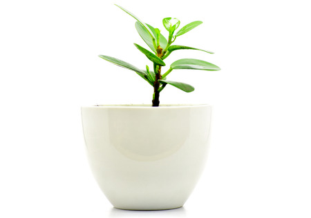 green plant pot isolate for decoration and interia design