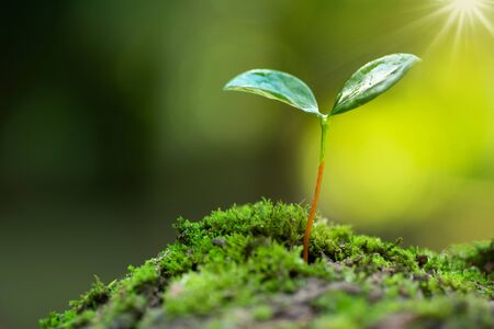 little tree growing on moss with sunlight and green environment in nature hope concept Stockfoto