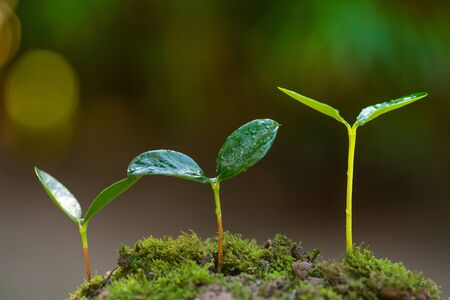 Plant growing to tree and forest concept on green background Stockfoto