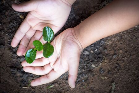 saving tree and environment concept, Kid hand protect plant spouts on ground Stockfoto