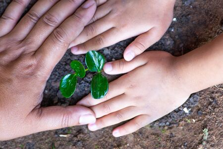 saving tree and environment concept, Kid and father hand protect plant spouts on ground