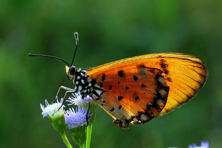 Butterfly fly in nature  photo